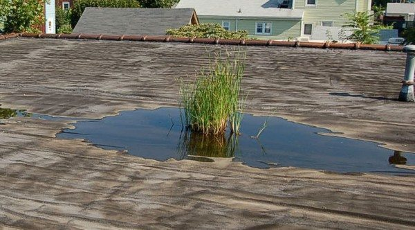 Flat roof drains, scuppers are important - pooling water will cause plants to grow deteriorating the roof